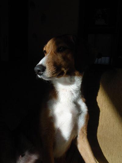 Ποια γεγονότα διαισθάνονται τα σκυλιά πριν καν συμβούν