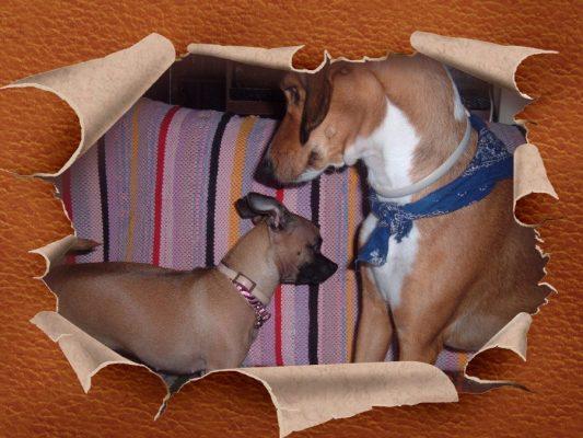 Ο πιο ασφαλής τρόπος να συστήσετε τον σκύλο σας σε άλλον