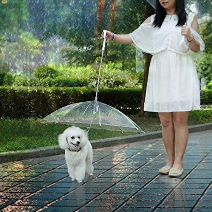 Έξυπνο gadget…ομπρέλα για σκύλους!