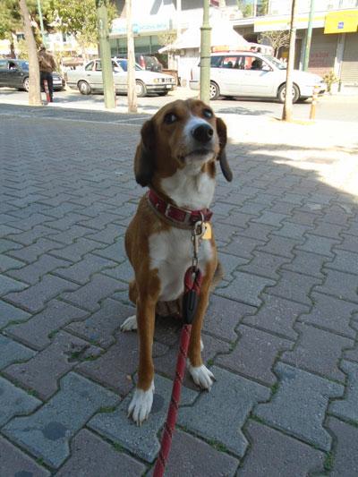 Πώς να εκπαιδεύσετε έναν κουφό σκύλο