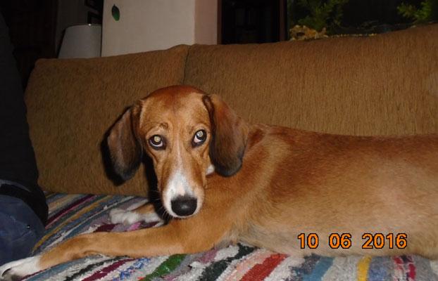 Κηδεμονία σκύλου μετά από διαζύγιο