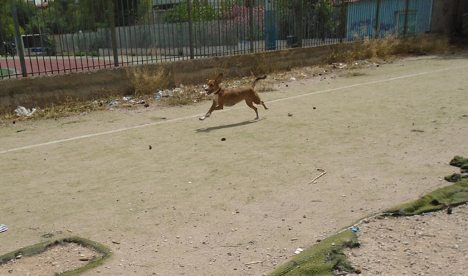 Ένα νέο πάρκο σκύλων στην Κρήτη