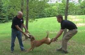 dogfight 1