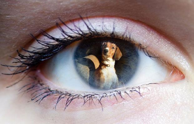 Γιατί ο σκύλος σας δείχνει προτίμηση σε άλλον;