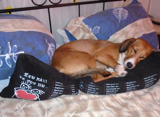 Γιατί κάνουν θόρυβο στον ύπνο τους τα σκυλιά;
