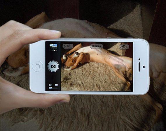 Φωτογραφική μηχανή για σκύλους!