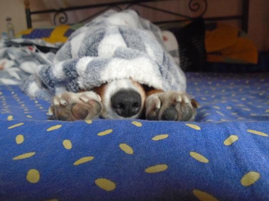Ποια ράτσα σκύλου συμβάλλει στην … θέρμανση;