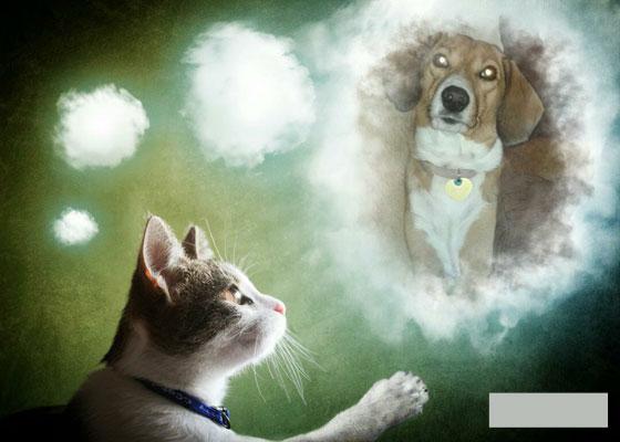 Ποιος είναι πιο έξυπνος; Η γάτα ή ο σκύλος; Μια έρευνα….