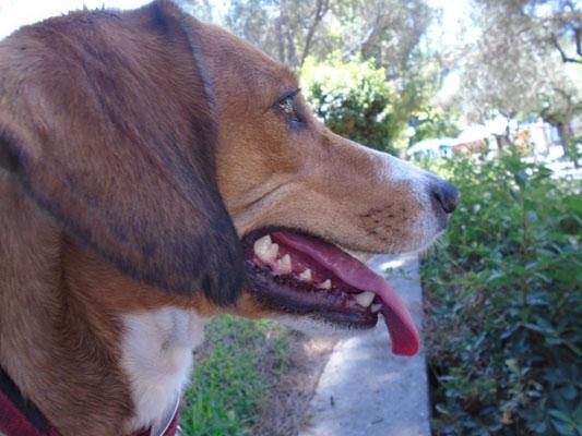 Τα σκυλιά είναι η καλύτερη παρέα… σύμφωνα με έρευνες