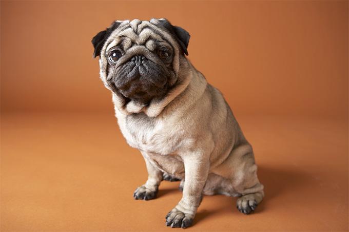 Μια έρευνα στο DNA των σκύλων θα σώσει πολλά παιδιά!