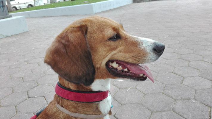 Σπιτική οδοντόπαστα για σκύλους και καθαρισμός