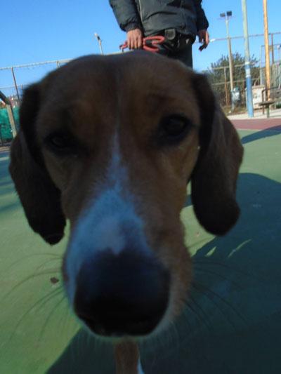 Η αρθρίτιδα στους σκύλους