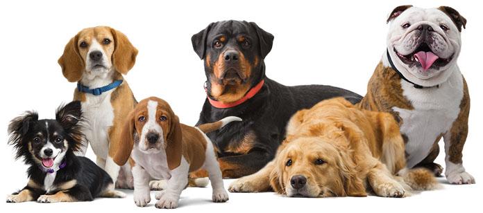 """Τεστ """"Τι ράτσα θα ήσουν αν ήσουν σκύλος"""""""