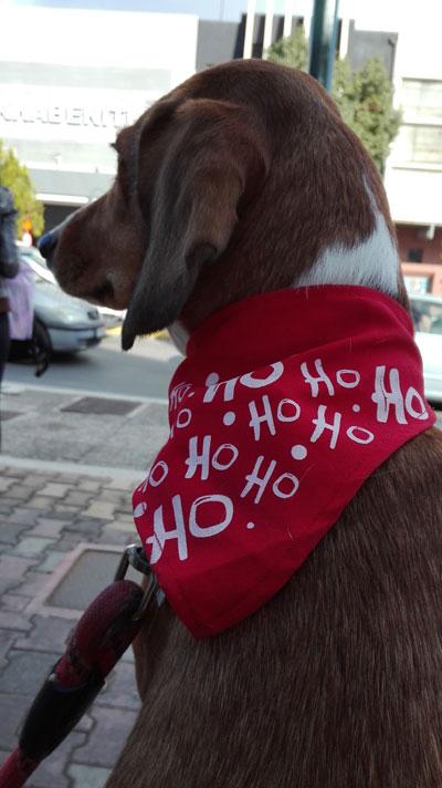 16 ανόητοι κι επικίνδυνοι μύθοι γύρω από τα σκυλιά
