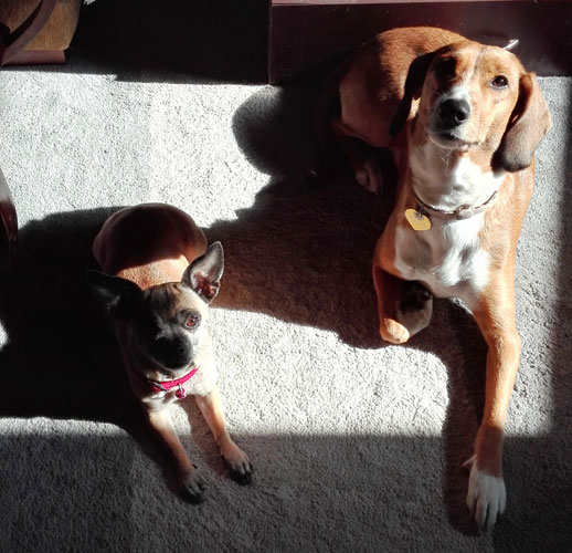 Συνταγή με αντικαρκινικές ιδιότητες για σκύλους