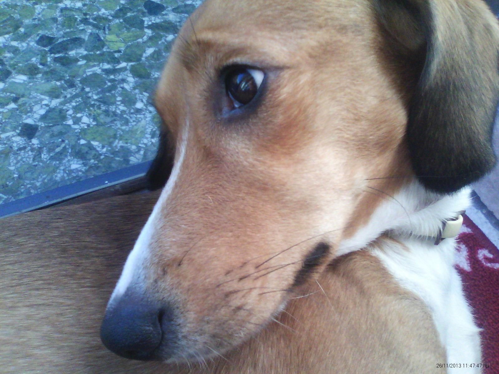Γιατί τα σκυλιά έχουν μουστάκια;