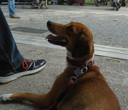 Ποια προσόντα χρειάζεται για να γίνει therapy dog