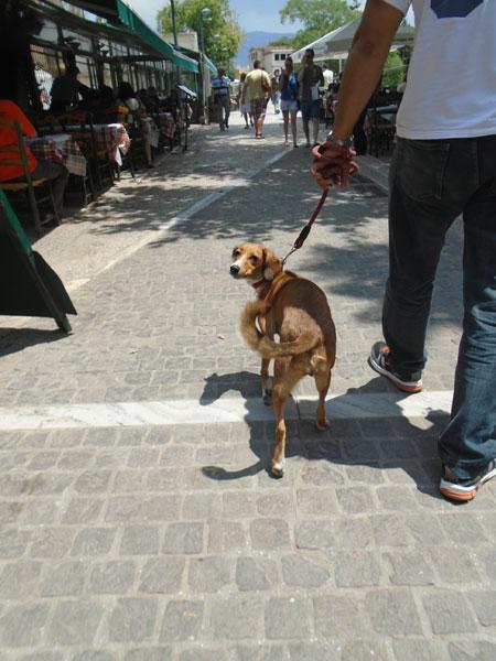 Συμβουλές για την σωστή βόλτα με τον σκύλο σας