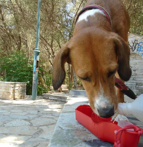 Ηλίαση και θερμοπληξία στα σκυλιά