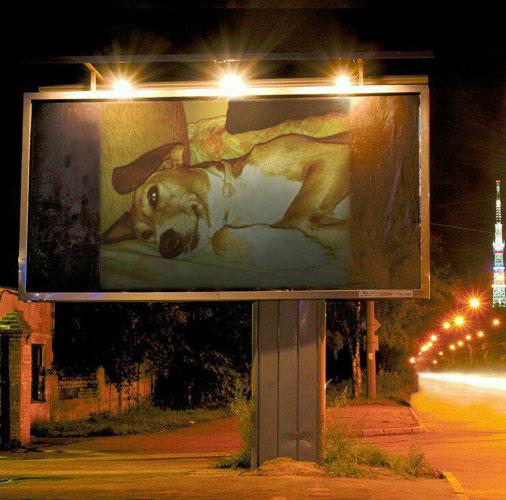 Περίεργοι και….αστείοι νόμοι για τα σκυλιά