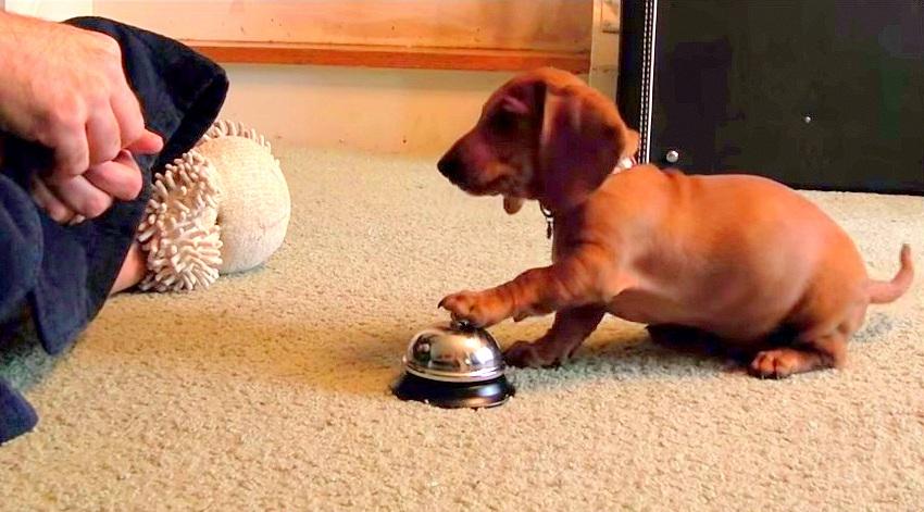 Ένα έξυπνο τρικ εκπαίδευσης σκύλων