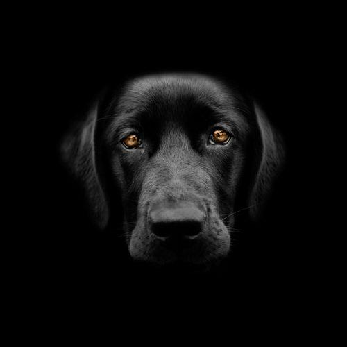 Άλλος ένας αστικός μύθος με σκύλο