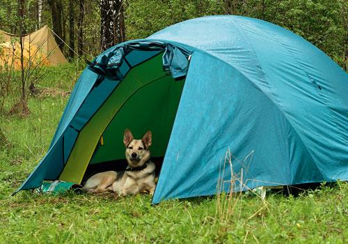 Συμβουλές για να κάνετε camping μαζί με τον σκύλο σας