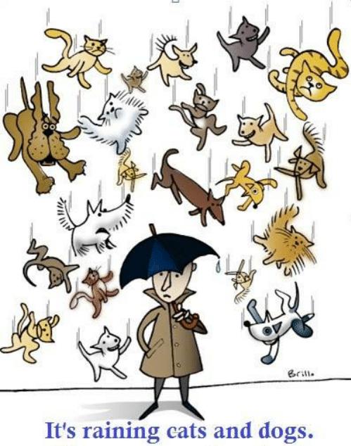 """Πώς βγήκε η φράση """"Βρέχει γάτες και σκύλους"""""""