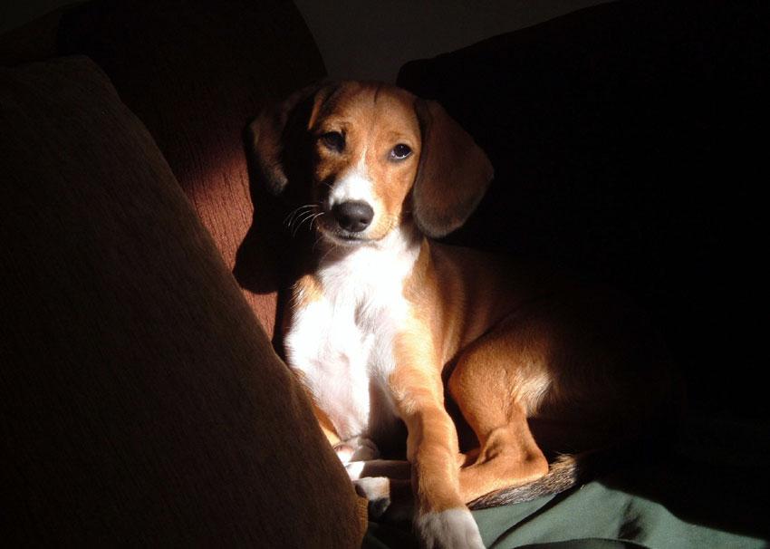 Πώς να προστατέψω τις πατούσες του σκύλου μου;