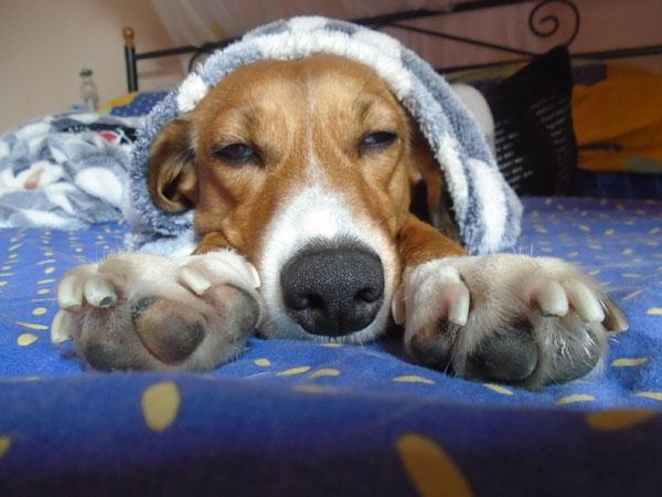 Επηρεάζει τα σκυλιά η αλλαγή της ώρας;