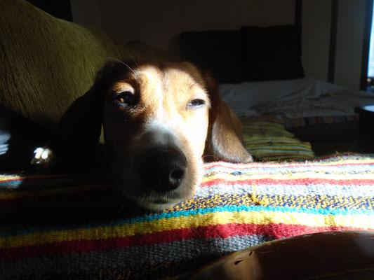 Ξέρει πραγματικά ο σκύλος ότι έχει πεθάνει ο ιδιοκτήτης του;