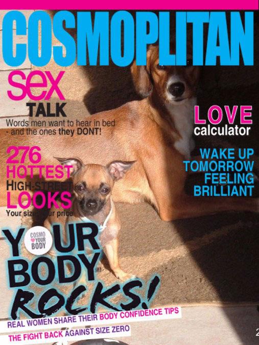 Η γλώσσα του σώματος του σκύλου