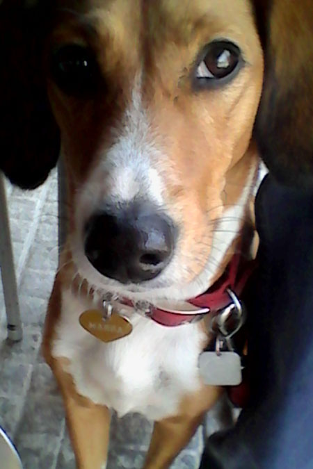 Πώς να κάνω τον σκύλο μου να με προσέξει;