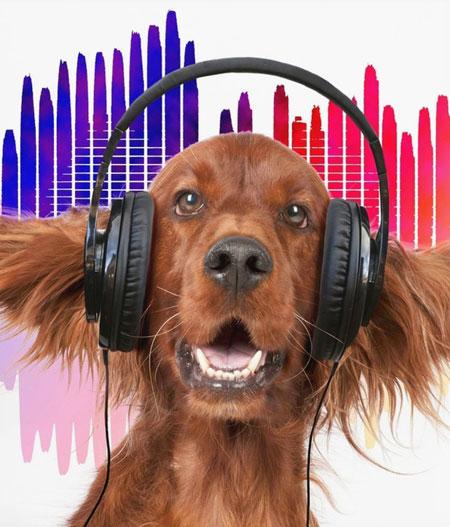 Ξέρετε ποιο είδος μουσικής χαλαρώνει τους σκύλους;