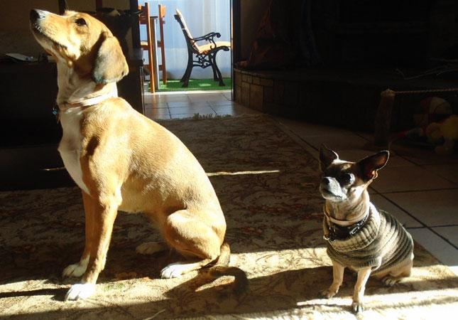 13 υπέροχες γνώσεις γύρω από τα σκυλιά!