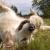 Γιατί τα σκυλιά κυλιούνται στο γρασίδι